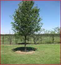 memorial tree one